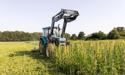 Protest calls for farmers to 'grow hemp without a licence'