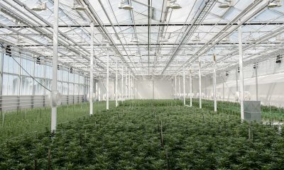 Aurora fulfils first product for French medical cannabis program