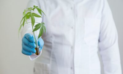 Cannabis genetics to be developed for specific healthcare applications