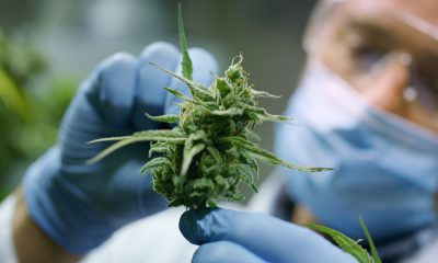 Grow group: innovating cannabis medicines and improving access