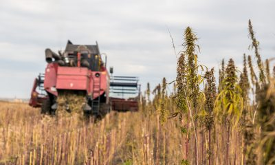Global Hemp Group to build affordable homes from hemp