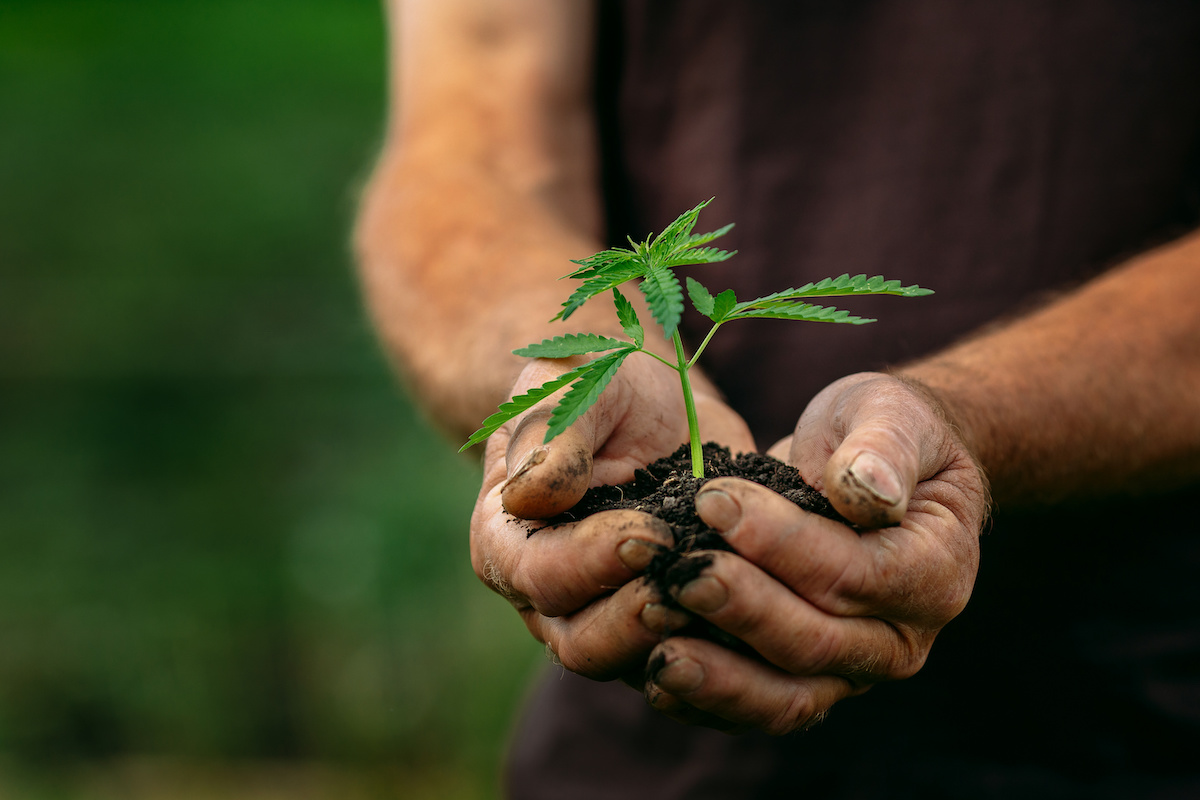 Economic sovereignty for indigenous farmers through cannabis cultivation
