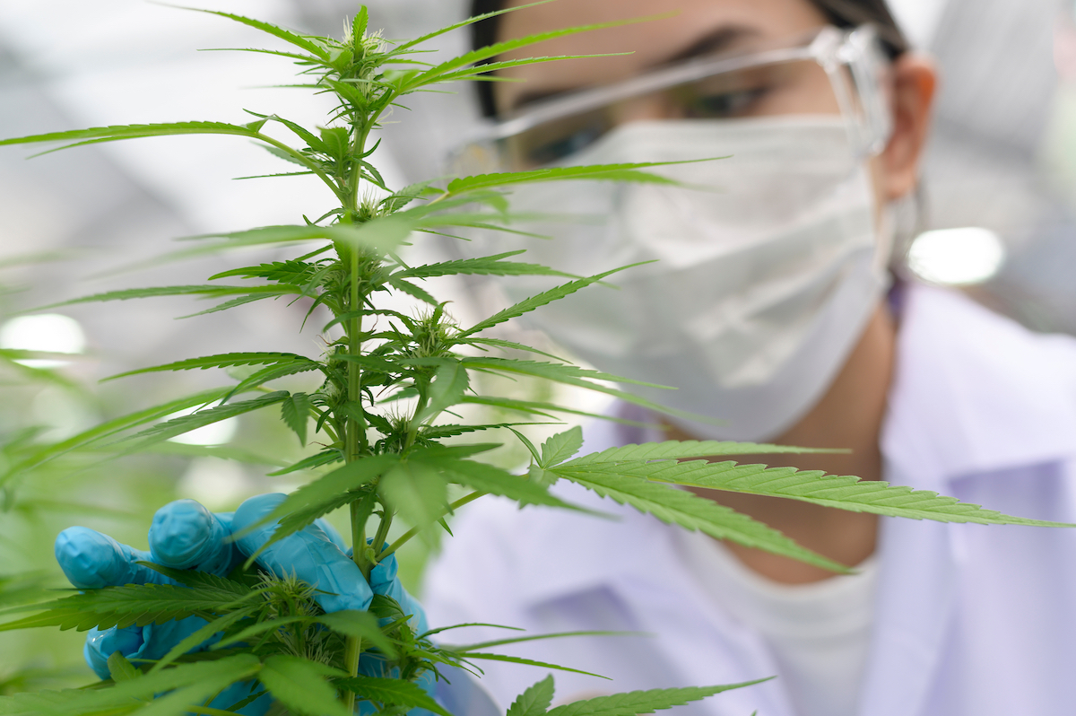 UK's NCRI endorses research into cannabis for treating cancer pain