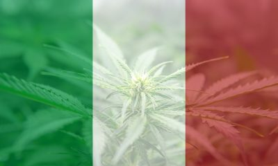 Small scale cannabis cultivation decriminalised in Italy