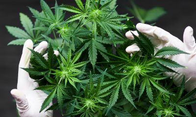 Panaxia to exit cannabis activities in Israel and focus on Europe