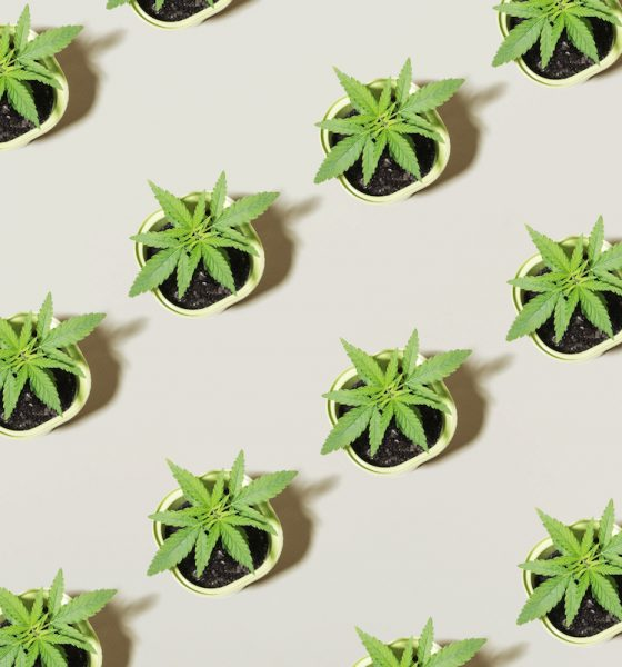Sweeping cannabis regulation changes across Switzerland and Luxembourg